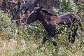 Cabalos en Canillo. Andorra-2.jpg