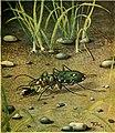 Caccia grossa fra le erbe (1942) (20518283431).jpg