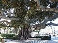 Cadiz parks 2020 05.jpg