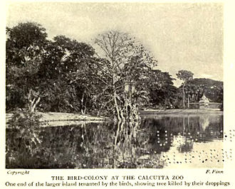 Zoological Garden, Alipore - Wild birds began nesting in large numbers within the zoo starting somewhere in the 1890s.
