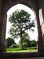 Callac 22. Botmel-porche-arbre1.jpg