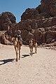 Camel in Petra7.jpg