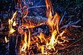 Campfire (15622054469).jpg