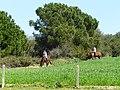 Camps de Can Borrell - P1180292.jpg