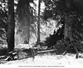 Campsite at Mosquito Flats on the Alsek River, Alaska Midland Railway survey, British Columbia, October 26, 1909 (AL+CA 3059).jpg
