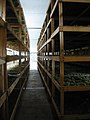 Cantina del Taburno, racks of grapes drying - panoramio.jpg