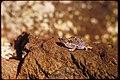 Capulin Volcano National Monument, New Mexico (fa5697dd-b4ea-4f74-ad0d-824df2030815).jpg