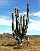 Image Result For Le Grand Cactus