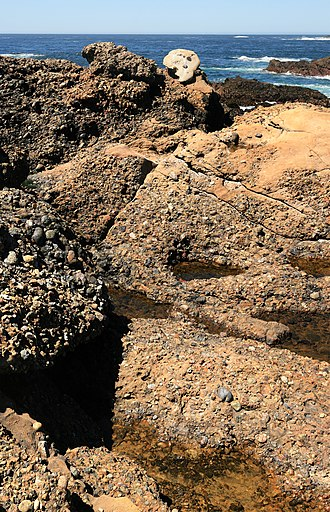 Conglomerate (geology) - Carmelo Formation (Conglomerate) at Point Lobos