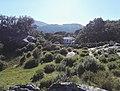 Casa Sierra de Grazalema.jpg