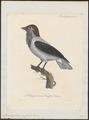 Casmarhynchus variegatus - 1825-1834 - Print - Iconographia Zoologica - Special Collections University of Amsterdam - UBA01 IZ16600153.tif