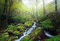 Caspian Forests (207720547).jpeg