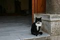 Cat outside a mosque.jpg
