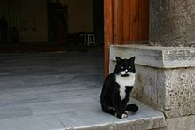Islam and cats - Wikipedia