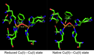 Catechol oxidase - The reduced (Cu(I)-Cu(I)) and native (Cu(II)-Cu(II)) catechol oxidase di-copper active site from the Ipomoea batata crystal structure (PDB: 1BT1, 1BT2).