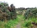 Cateran Trail near Bamff - geograph.org.uk - 1532336.jpg
