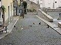 Cats - panoramio.jpg