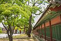 Changdeokgung Heohwanamugun Trees (창덕궁 회화나무군) - 8.jpg