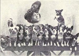 Chihuahua from 1915