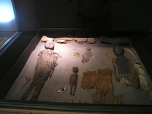 Chinchorro mummies - Mummies at the museum in San Miguel de Azapa.