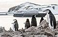 Chinstrap Penguins Half Moon Island Antarctica 10 (32394789727).jpg