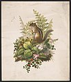 Chipmunk and ferns - after Mrs. O.E. Whitney. LCCN2016652304.jpg