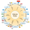 Citric Acid Cycle.png