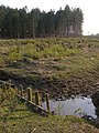 Cleared area in Ipley Inclosure, New Forest - geograph.org.uk - 398147.jpg
