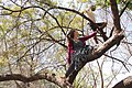 Climbing trees at Michael Mount.JPG