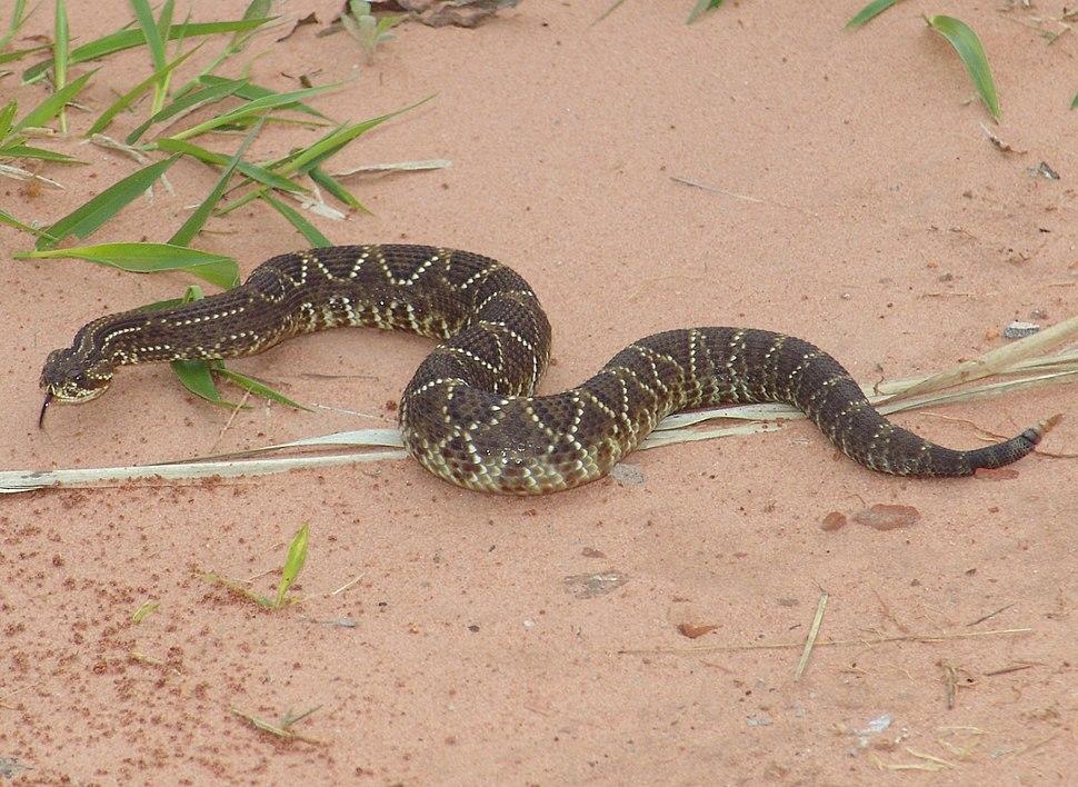 Cobra cascavel 280707- 23 04 40s - 49 06 55w REFON (4)a