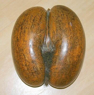 Coco-fesse1.JPG