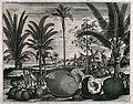 Coconuts and trees (Cocos nucifera), a cinnamon tree (Cinnam Wellcome V0043077.jpg