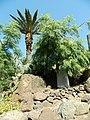 Comarca Oeste, Las Palmas, Spain - panoramio (8).jpg
