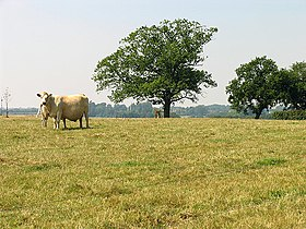 Common Farm on Beedon Common - geograph.org.uk - 39289.jpg