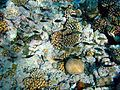 Coral reefs with fishes.JPG