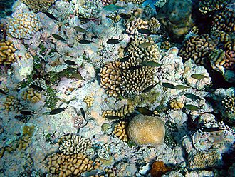Wildlife observation - Coral reef with fish