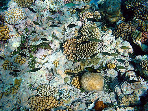 Coral reefs with fishes