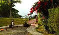 Costa Rica DSCN2285-new (31129933165).jpg
