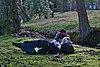Couple of muscovy ducks (male in the foreground) in molenvijverpark, Genk, Belgium (DSCF3031).jpg