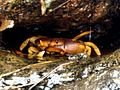 Crab-Between the Rocks.jpg