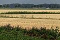 Crop (27924773014).jpg