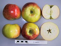 Cross section of Einset 8, National Fruit Collection (acc. 1965-039).jpg