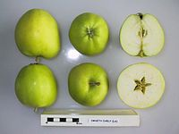 Cross section of Emneth Early (LA), National Fruit Collection (acc. 1975-321).jpg