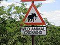 Crossing Elephants.JPG