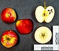 Cybelle (apple) jm122101 ji.jpg