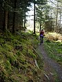 Cycle Trail in Dalbeattie Forest - geograph.org.uk - 392726.jpg