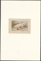 Cygnus coscoroba - 1873 - Print - Iconographia Zoologica - Special Collections University of Amsterdam - UBA01 IZA1000558.tif