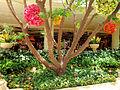 DSC32224, The Wynn Hotel, Las Vegas, Nevada, USA (8140243108).jpg
