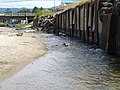 D River - panoramio.jpg