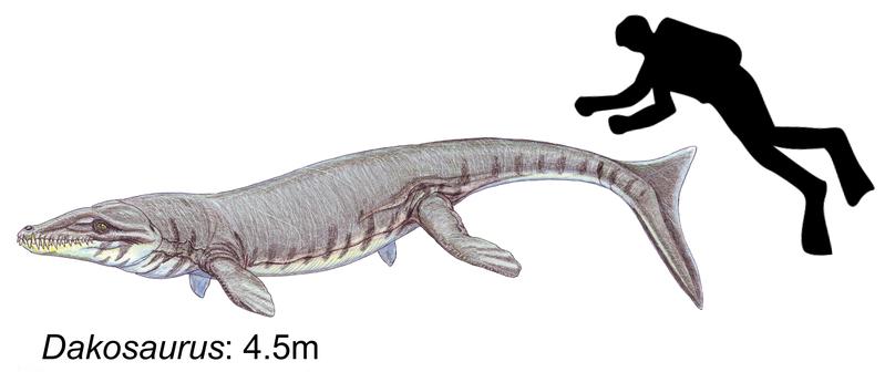 File:Dakosaurus maximus.png